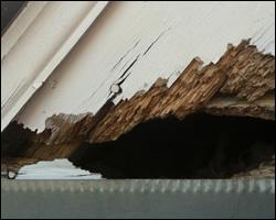 Squirrel damage in Charlottesville VA