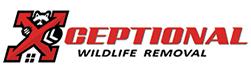 Charlottesville Wildlife Removal
